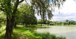 Erlenwiesenweiher - Angler Club Westend